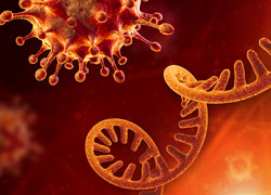 An image of the virus and RNA
