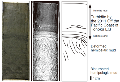 A photograph of the marine sediment core collected from St. 1 off the coast of Sendai(left); a transmission X-ray image of the core obtained through X-ray CT (center); and a line drawing of the core (right); figre