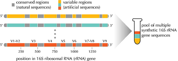 Figure of Developed artificial nucleic acid reference materials (artificial 16S rRNA genes) and a mixture of the reference materials to be used as an internal standard