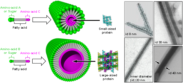 Figure: Structure of nanocapsules with different inner diameter sizes (left) and transmission electron microscope images (right)
