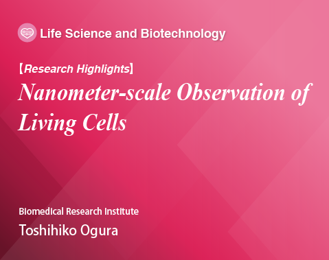 research Highlights, Nanometer-scale Observation of Living Cells