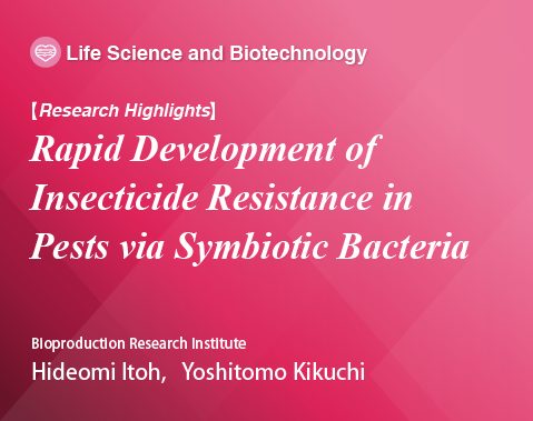 Research Highlights, Rapid Development of Insecticide Resistance in Pests via Symbiotic