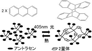 アントラセンの2量化反応とそれを利用した分子間架橋反応模式図