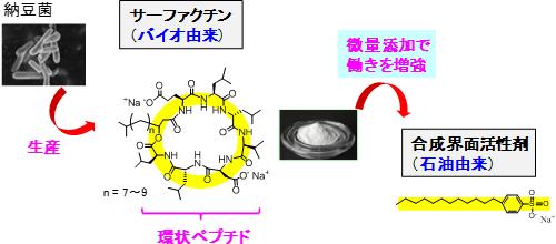 サーファクチン(左)と合成界面活性剤(右)の図