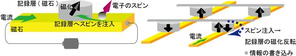 (左)今回作製した素子の模式図と(右)今回の成果から提案される不揮発性磁気メモリーの模式図