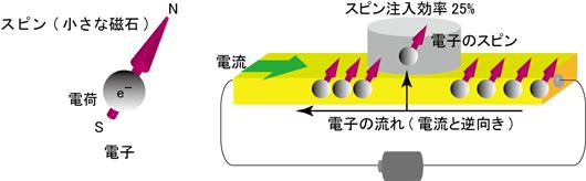 スピンおよびスピン注入の概念図