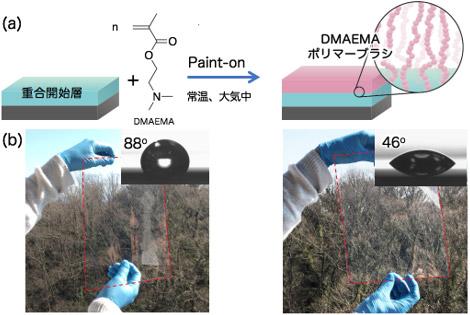 (a)今回使用したモノマーの構造式と今回開発したポリマーブラシ作製技術の概要図(b)Paint-on法によるDMAEMAポリマーブラシ作製前後のPETフィルム外観、透明性および水滴接触角の写真