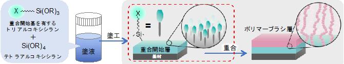 今回開発した重合開始層の形成方法と得られるポリマーブラシの概要図