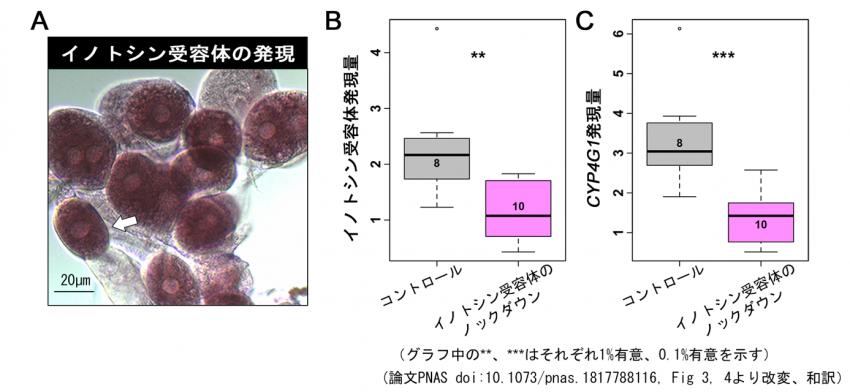 アリの神経ペプチドを介した乾燥環境耐性の仕組みを解明
